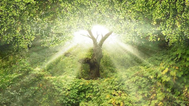 La Verdad sobre el fruto del Árbol del EDÉN